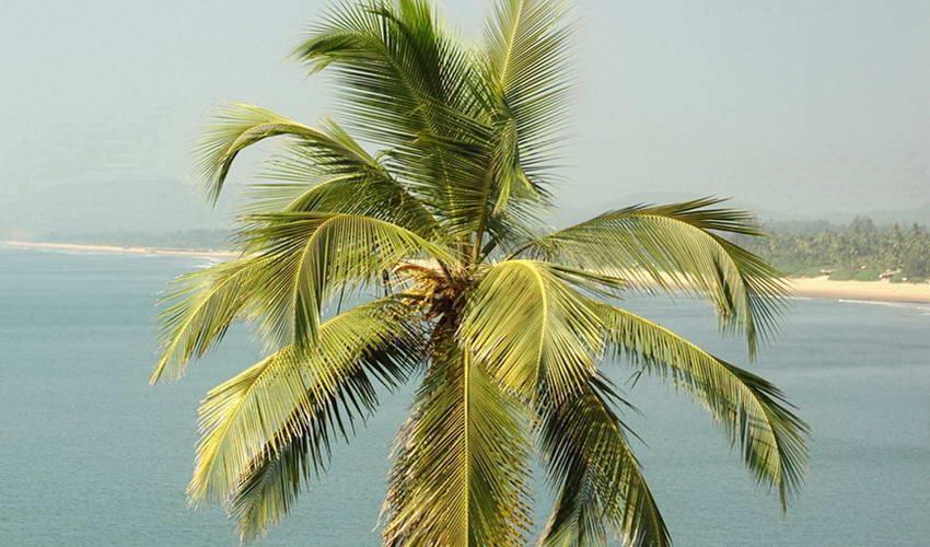 נופש בסרי לנקה: בנגומבו – Negombo